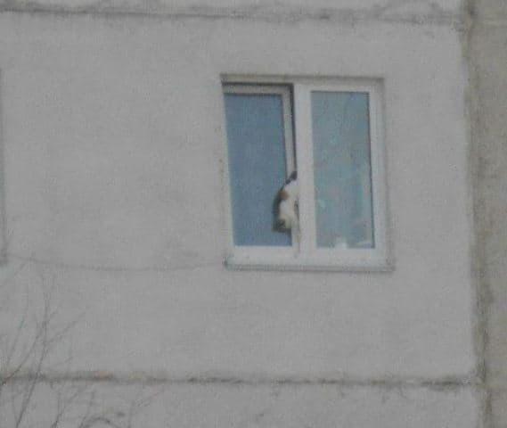 В Башкирии любопытная кошка чуть не сорвалась с восьмого этажа