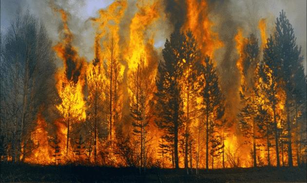 Дожди потушили практически все пожары вИркутской области