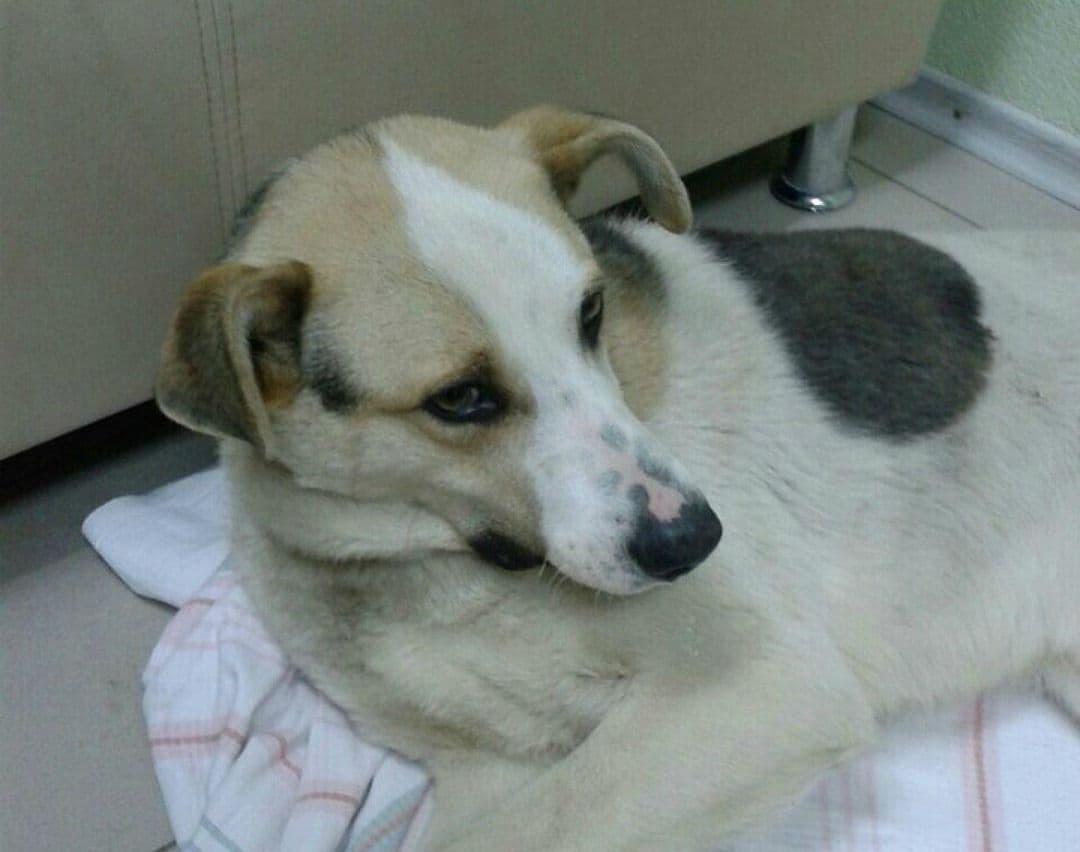ВУфе волонтёры собирают средства, чтобы посодействовать собаке, покалеченной автомобилем