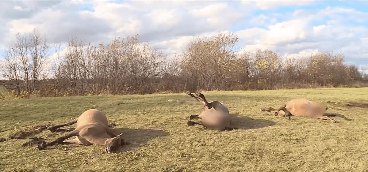 В Башкирии обстреляли табун лошадей