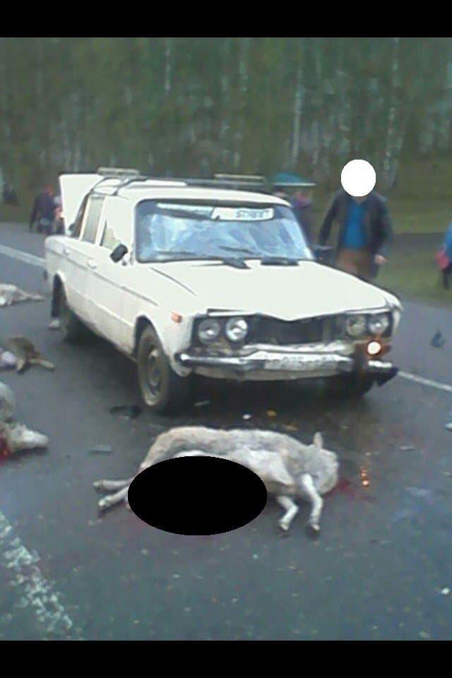 В Башкирии водитель легковушки врезался в стадо овец, животные погибли