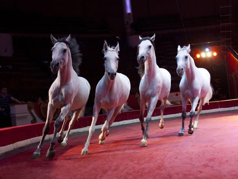 Уфимский цирк отправил лошадей вУкраинское государство