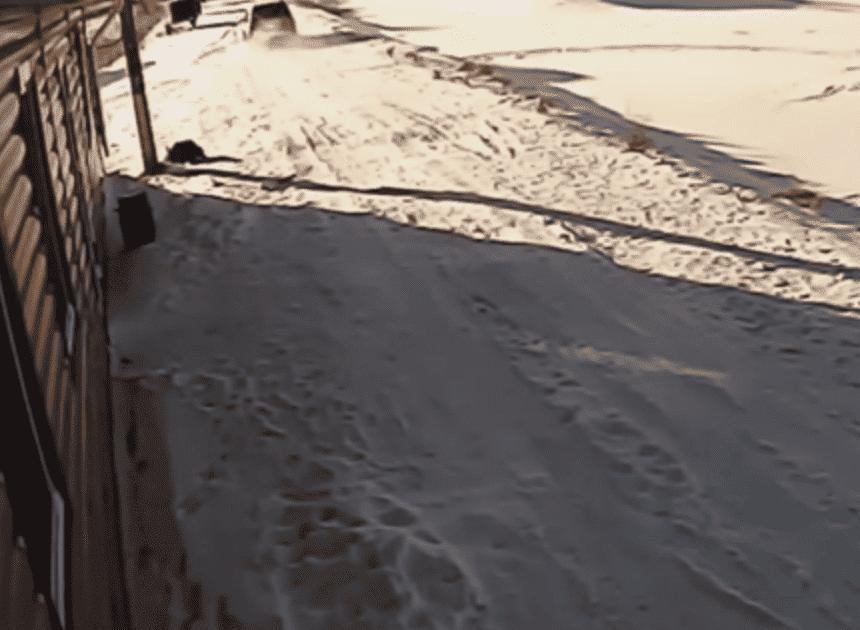 Убийство служебной собаки вБашкирии попало вобъектив камеры видеонаблюдения
