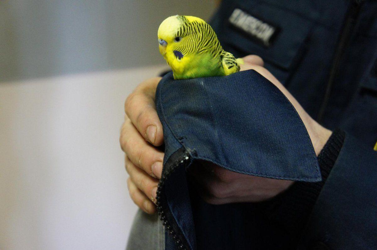 В Уфе спасатели пригрели замерзающего попугайчика