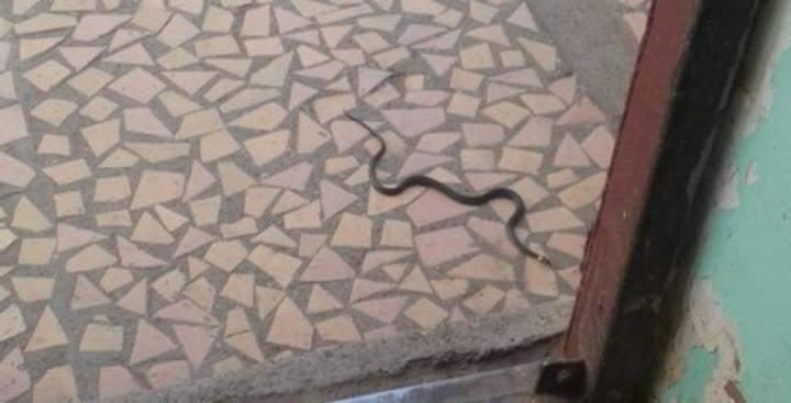 Жителей многоэтажки в Башкирии атаковали змеи