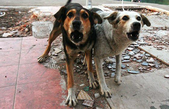 Покусанная собакой старая жительница Нефтекамска получит 50 тыс. руб. компенсации