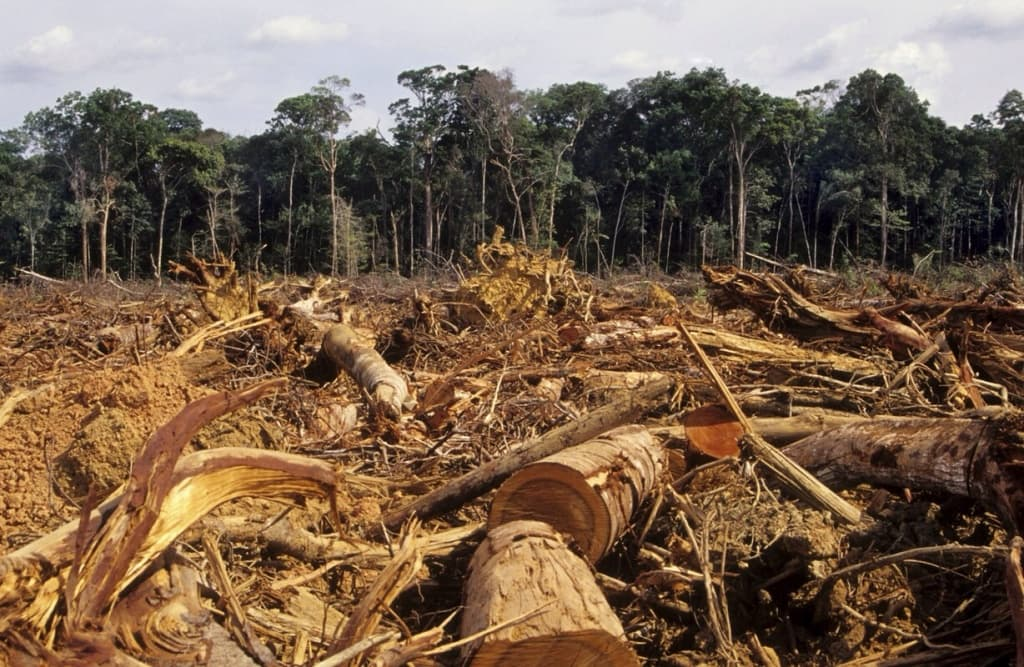 an introduction to the issue of rain forest destruction and the earth What once was a green earth is now becoming a introduction human life cannot exist in the absence more about essay about the impact of deforestation.