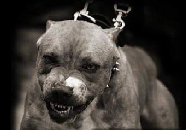 Уфимка добилась компенсации занападение собаки бойцовской породы