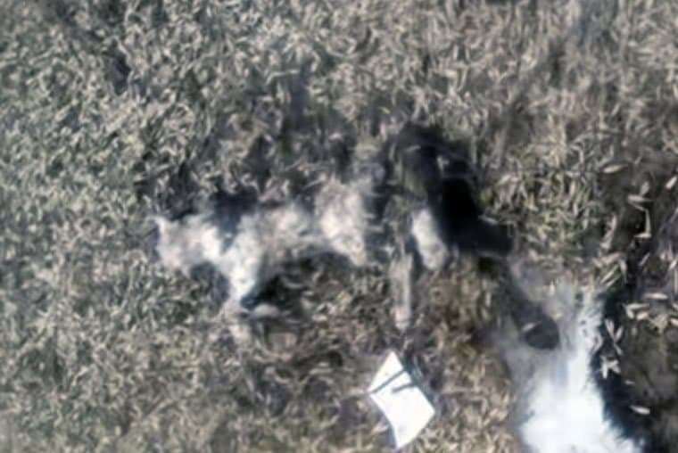 Встолице Башкирии живодеры изуродовали кошек ивыкололи имглаза