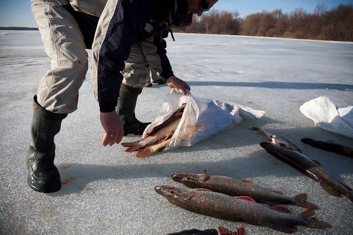 ВБашкирии браконьеры нелегально выловили неменее 15кг рыбы