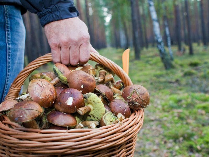 ВУфе cотрудники экстренных служб отыскали грибника, заблудившегося влесу
