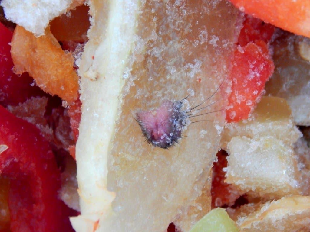 Уфимка отыскала взамороженных овощах мышиную голову