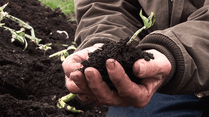 6.-Robert-Shaffer-Holds-Soil.png