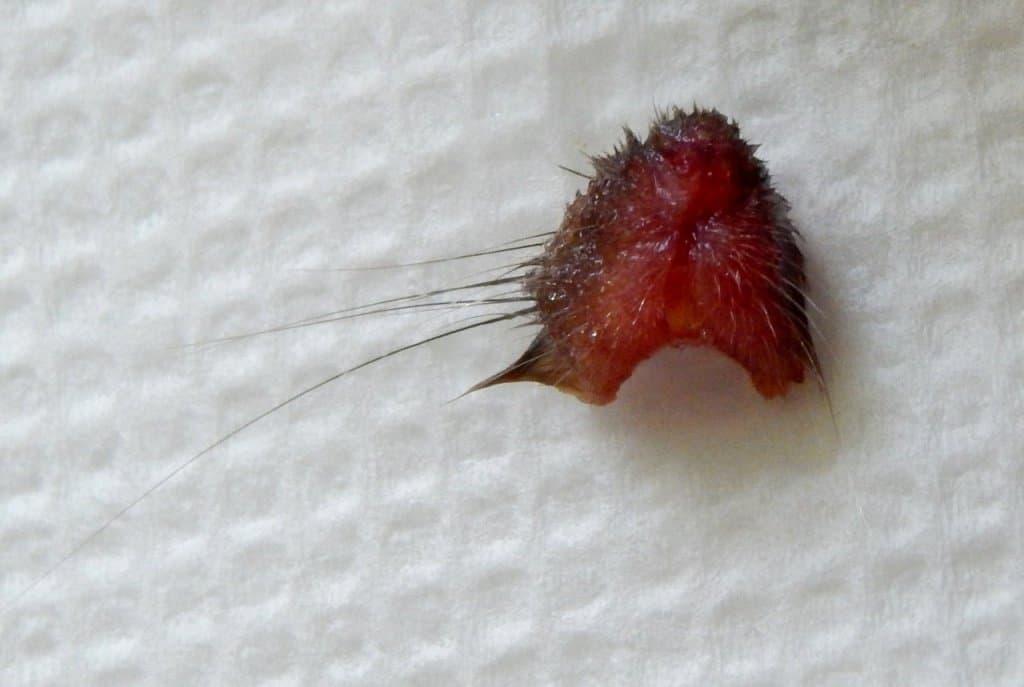 Беременная уфимка нашла голову мыши вупаковке замороженных овощей
