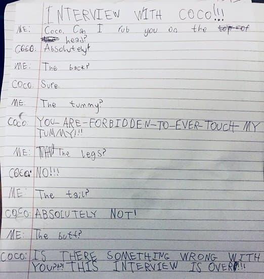Девочка взяла интервью укотика истала звездой Интернета